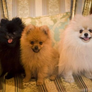 Will, Bertie and Freddie