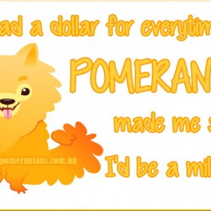 Pomeranians make me smile
