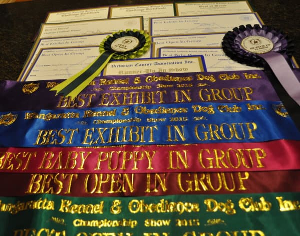 The ribbons, rosettes and prize cards won by the Dochlaggie team last weekend.