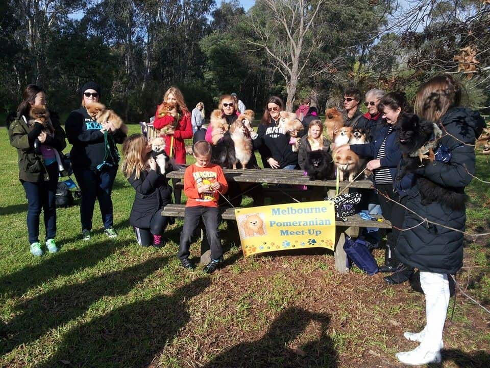 Melbourne Pomeranian meet- Up