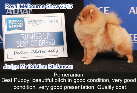 * No. 1 Pomeranian – Rising Star Competition – Victoria