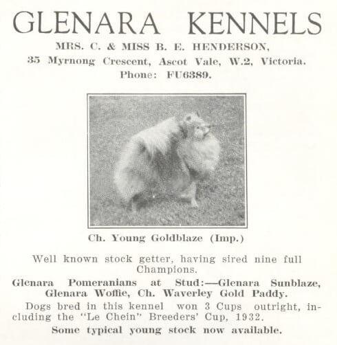 Pomeranian Champion Young Goldblaze Imported