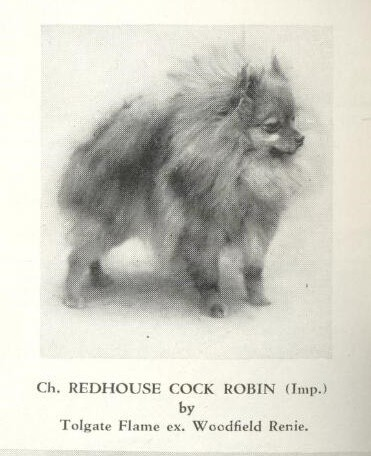 Pomeranian Champion Redhouse Cock Robin Imported
