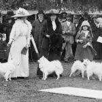 Pomeranian Judging Adelaide 1917