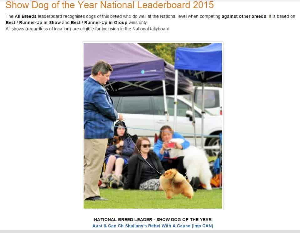 Aust & Can Ch Shallany's Rebel With A Cause (Imp CAN) is #1 POMERANIAN Australia  2015