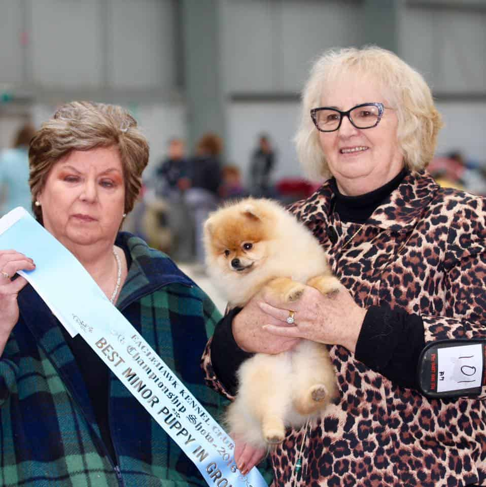 Dochlaggie Deagol the Hobbit, winning, Best Minor Puppy in group, Bendigo, show