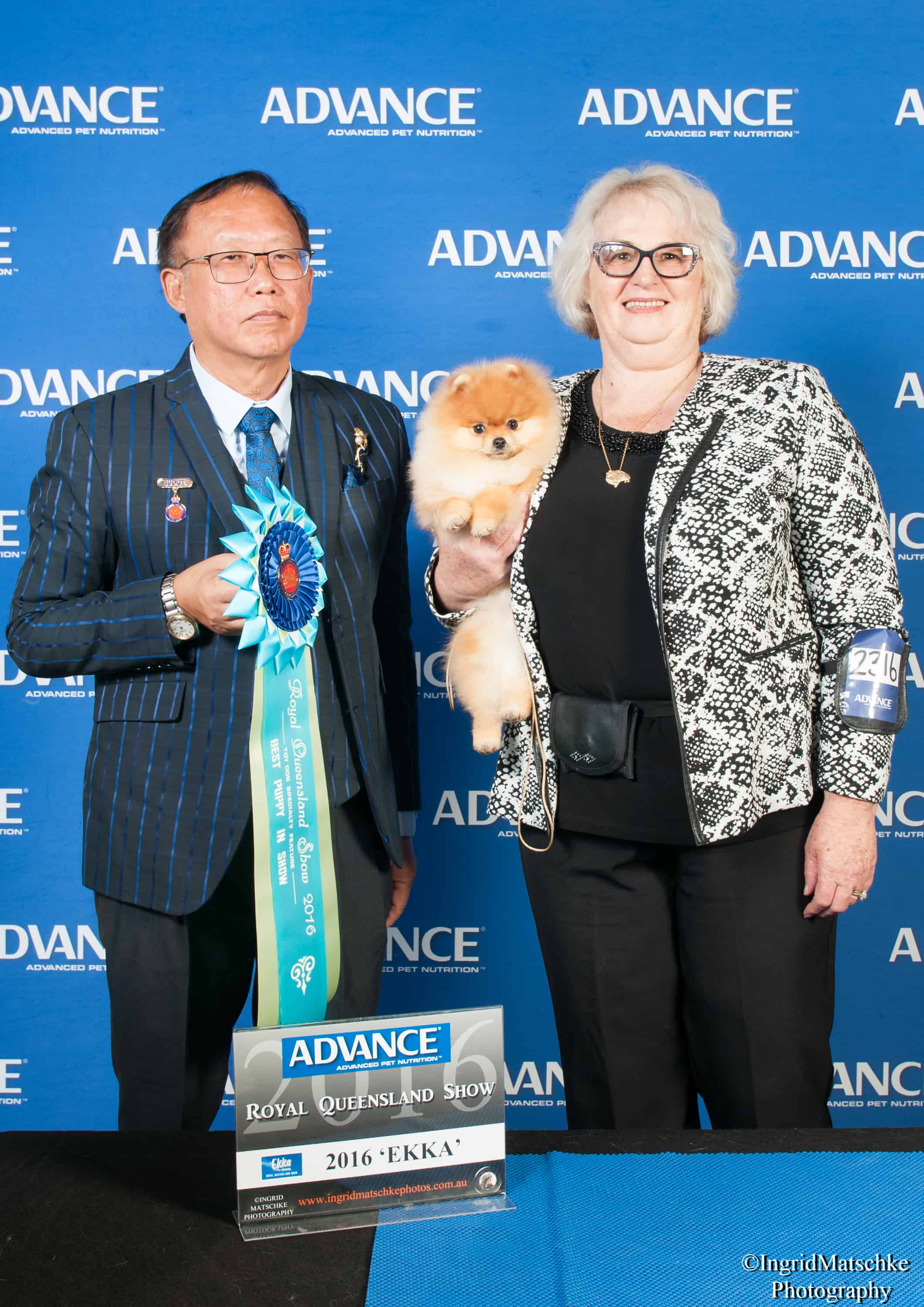 Dochlaggie Deagol The Hobbit winning BEST PUPPY IN SHOW at the EKKA under breed specialist judge Mr Weng Woh Chan