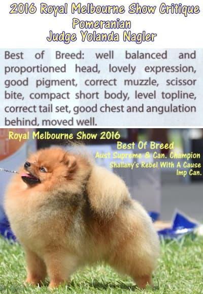 Royal Melbourne Show 2016 Pomeranian Critiques