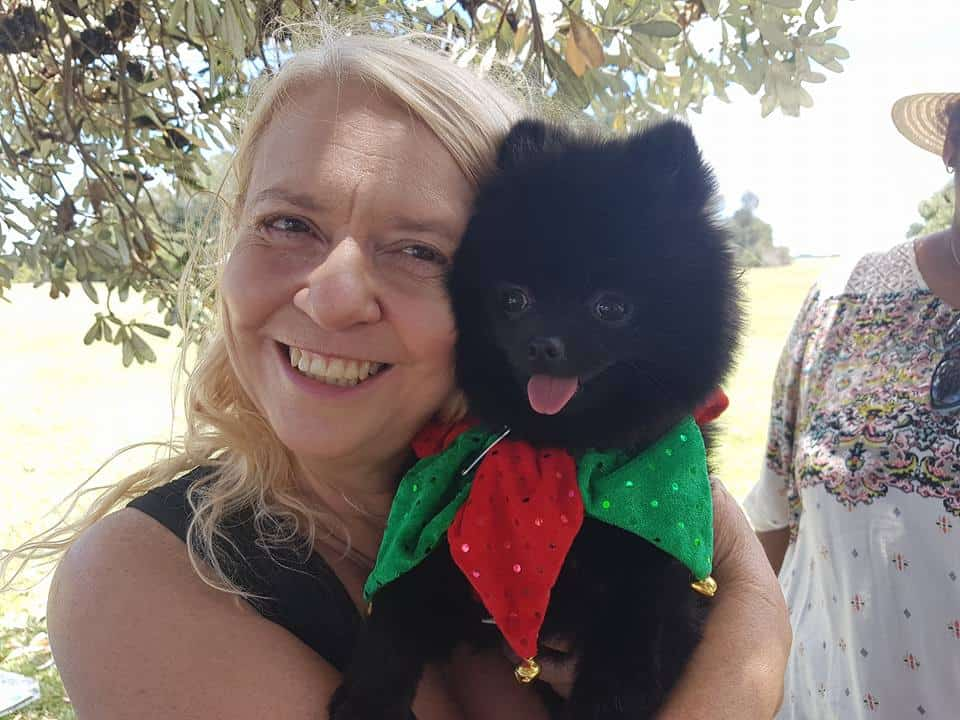 Pomeranians NSW Christmas  Party and Meet Up was held on 4th December, 2016