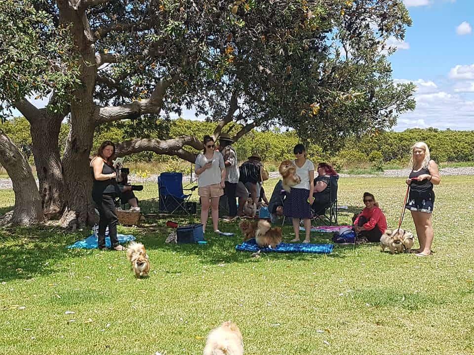Pomeranians NSW Christmas Party 2017
