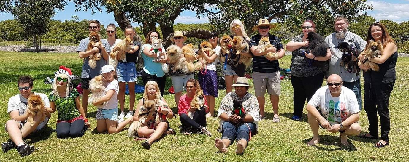 Pomeranians N.S.W. Meet- Ups 2018, Pomeranians N.S.W., Pomeranians Sydney, Pomeranian Sydney, Pomeranians Sydney Meet-ups 2018, N.S.W.Pomeranians Sydney,