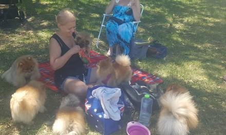 Pomeranians NSW July Meetup 2018