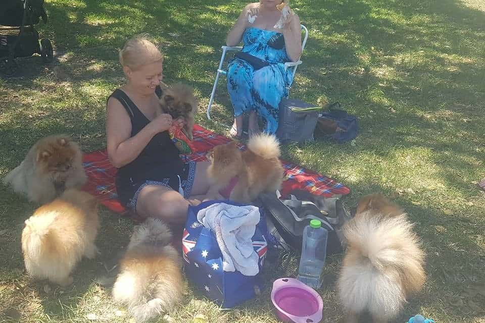 Pomeranians NSW July Meetup 2018