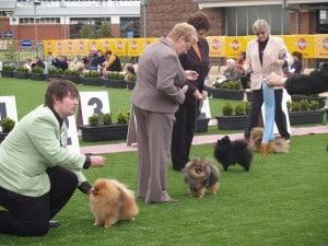 Pomeranian Judging Royal Melbourne Show 2018