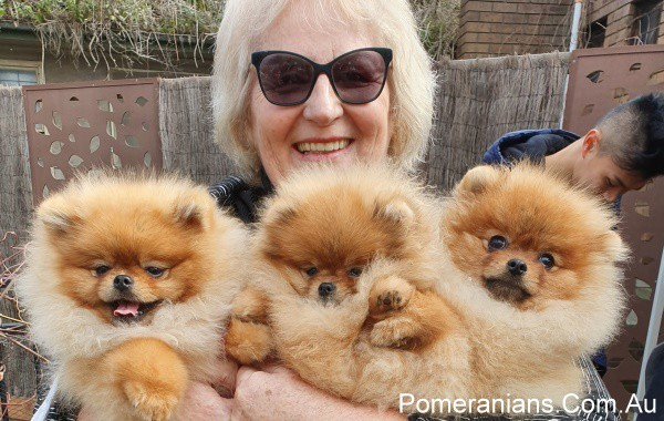 Pomeranians Melbourne July MEET-UP 2019 | Pomeranian