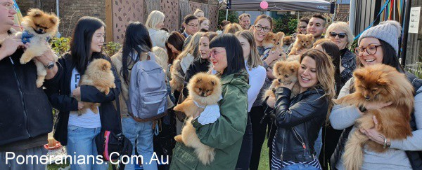 Pomeranian Dogs and their Owners at the Melbourne Winter Pomeranian Meet Up 2019