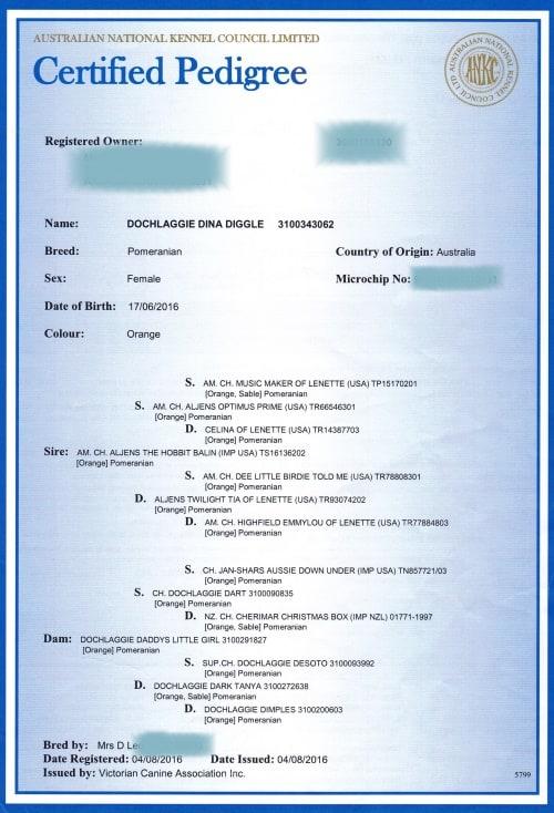 Main Registration Pedigree Certificate