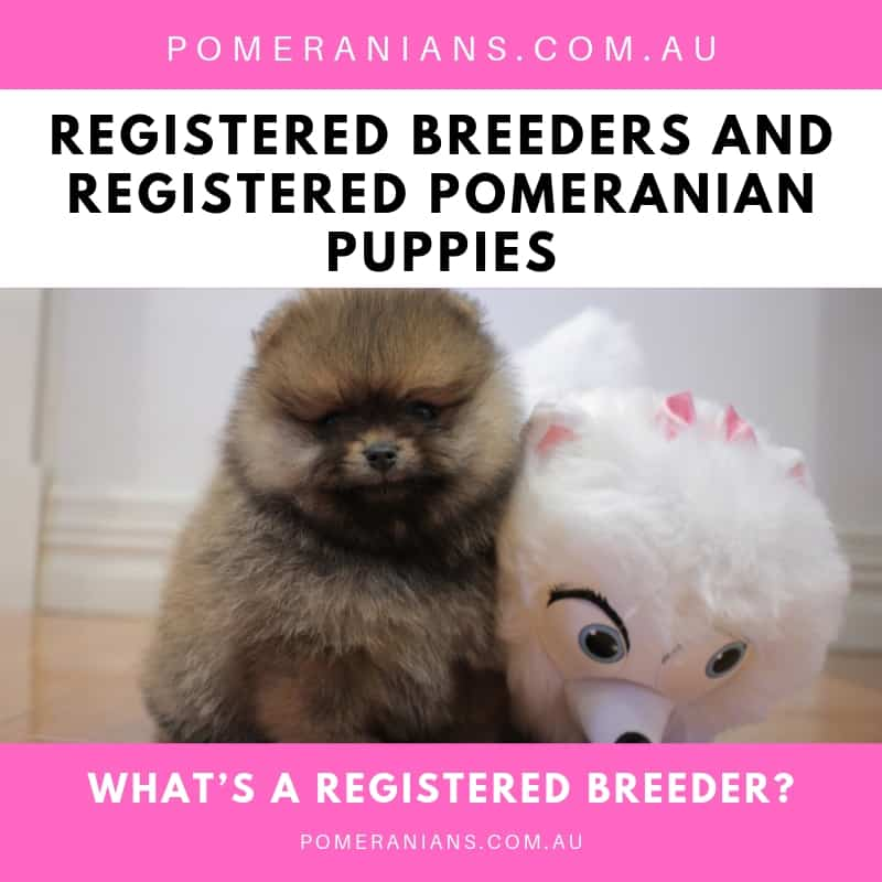 What's a Registered Breeder