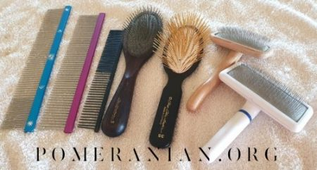 Pomeranian Grooming Equipment