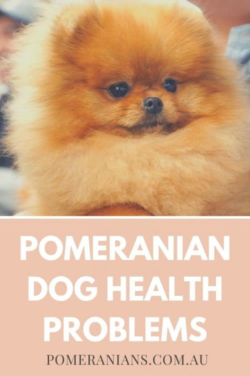 Pomeranian health problems