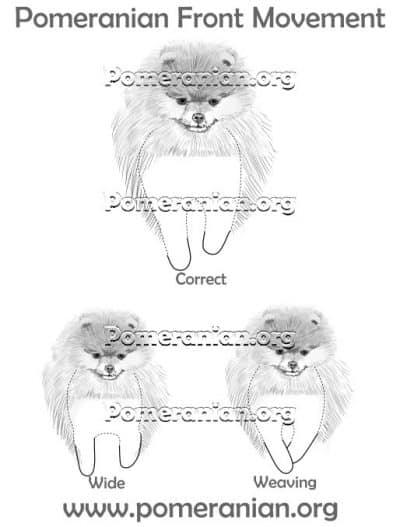Pomeranian Front Movement