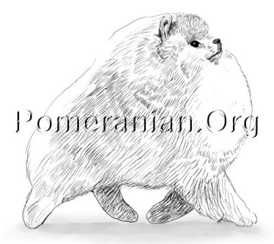 Pomeranian Movement