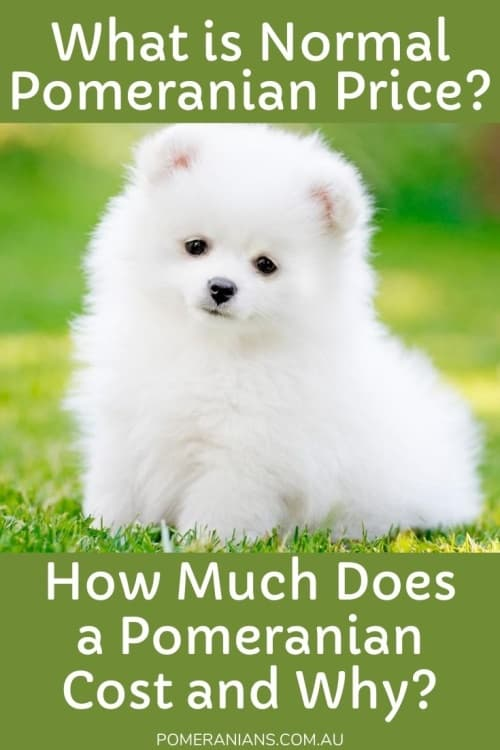PomeranIan Prices